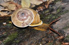 current snail research facts about snails