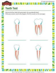 teeth test u2013 free science worksheets for sixth graders u2013 of