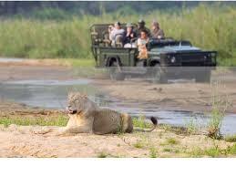 safari fivezero safaris luxury customised safaris tailored to suit you