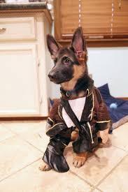 Halloween Costumes Husky Dog 10 German Shepherd Halloween Costumes Drop Jaw
