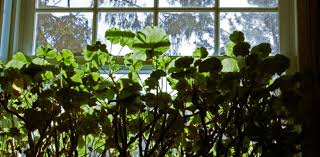 clearing the air the hidden wonders of indoor plants