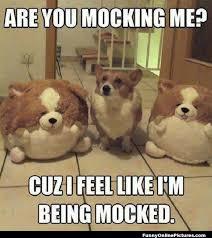 Ermahgerd Animal Memes - ternershberl