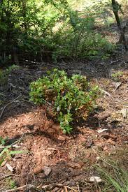 woodbrook native plant nursery dsc 0021 my own personal jungle