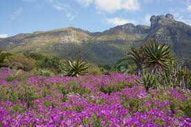 Kirstenbosch National Botanical Gardens by Kirstenbosch National Botanical Gardens In Cape Town South Africa