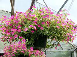 flower baskets www riothorseroyale wp content uploads 2016 02