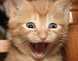 Meme Generator Cat - excited cat meme generator imgflip