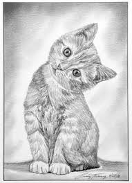 tiger pencil drawing pencil drawings pinterest tigers tiger