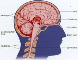 What Causes Blindness In Humans Concussion Body Last Causes What Causes Concussion