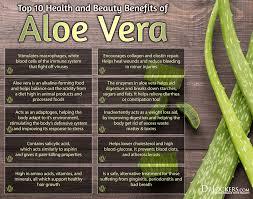 4 Biggest Benefits Of Gel 6 Benefits Of Aloe 5 Uses For The Skin Drjockers Com