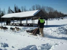 white oak dog sled race u2013 white oak society