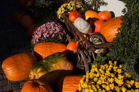 free images fruit flower orange green harvest produce