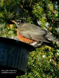 winter birds our fairfield home u0026 garden our fairfield home