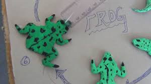 science projects by class 8 students 11 life cycle of frog youtube