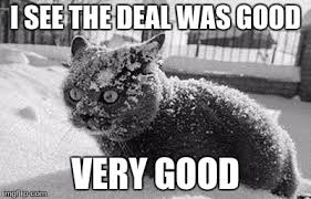 So Much Cocaine Meme - so much cocaine cat memes imgflip