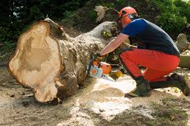 what to about tree cutting and removal yellowpages