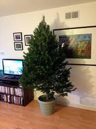 christmas tree stands the modern diy diy christmas tree stand