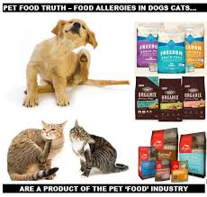 ottawa valley dog whisperer food allergies in dog cats u2013 causes