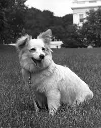 house dogs white house dogs pushinka and charlie and white house ducks