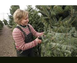 christmas tree sales light up across tennessee valley times free