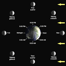 phases of the moon lunar cycle diagram shapes pictures names