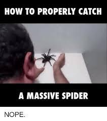 Huge Spider Memes Image Memes - 25 best memes about spider nope spider nope memes