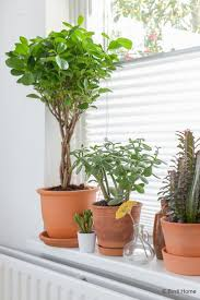 860 best house plants images on pinterest indoor plants plants