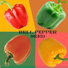 online buy wholesale mini bell peppers from china mini bell
