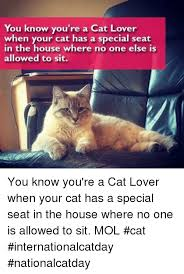 Cat Lover Meme - you know you re a cat lover when your cat has a special seat in
