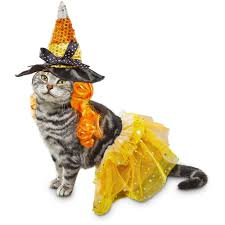 candy corn witch halloween costume bootique candy corn witch dog costume petco