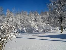 february snow storm scaredycatfilms