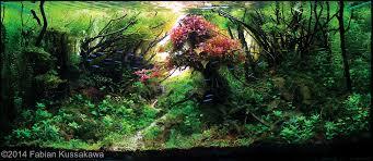 Aquascape Tank Best Aquascapes Of 2014 Aquarium Info
