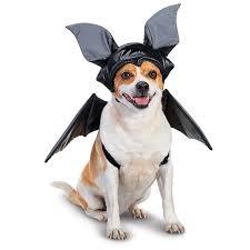 Halloween Costumes Bat 44 Halloween Dog Images Animals Animal