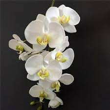 cymbidium orchids green cymbidium orchid flower artificial cymbidium orchids