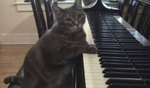 Cat Playing Piano Meme - nora the piano cat video funny boomsbeat