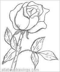 drawn rose pencil outline pencil and in color drawn rose pencil