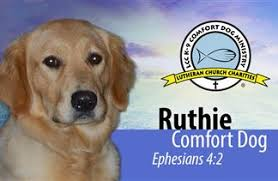 Comfort Golden Sandy Hook Family Honors Comfort Dog Ruthie As Aspca Dog Of The Year