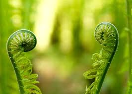 Free Picture Leaf Nature Fern Fiddlehead Images Pixabay Free Pictures