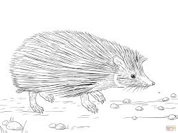 neoteric design hedgehog coloring pages 16 hedgehog activities