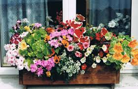 Window Flower Boxes Dainty You Blog Also How To Choose Window Boxes To Charmful Window