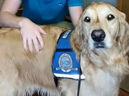 Comfort Golden Comfort Dogs Help Frightened Kids At The Dentist