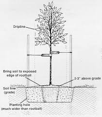 tree stakes integrity tree servicephoenix archives integrity tree service