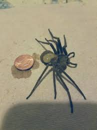 I Tried Killing A Spider - this spider was so big i feel like i committed murder by killing it