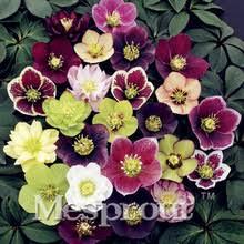 roses wholesale popular garden roses wholesale buy cheap garden roses wholesale