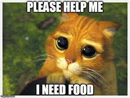 I Need Memes - shrek cat meme imgflip