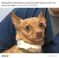 Chihuahua Meme - the best chihuahua memes memedroid