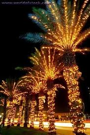 palm tree christmas tree lights palm trees with christmas lights one of these years i want to
