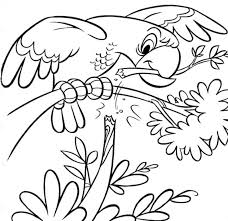 parrot bird animals coloring pages coloring pages