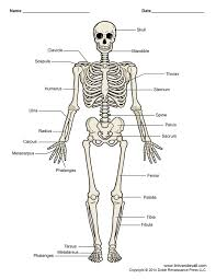 50 best two week unit the human body images on pinterest