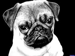 pug face drawing kids coloring europe travel guides com