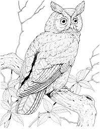 100 birds of prey coloring pages birds prey coloring pages